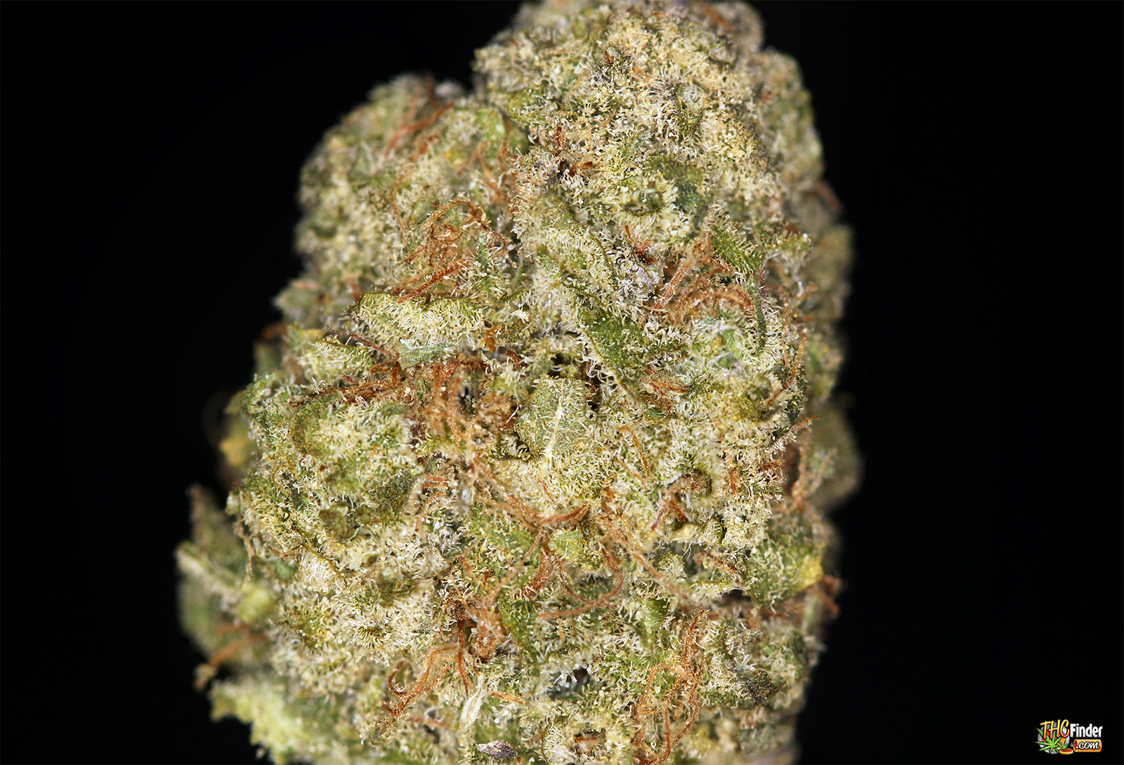 kryptonite-weed