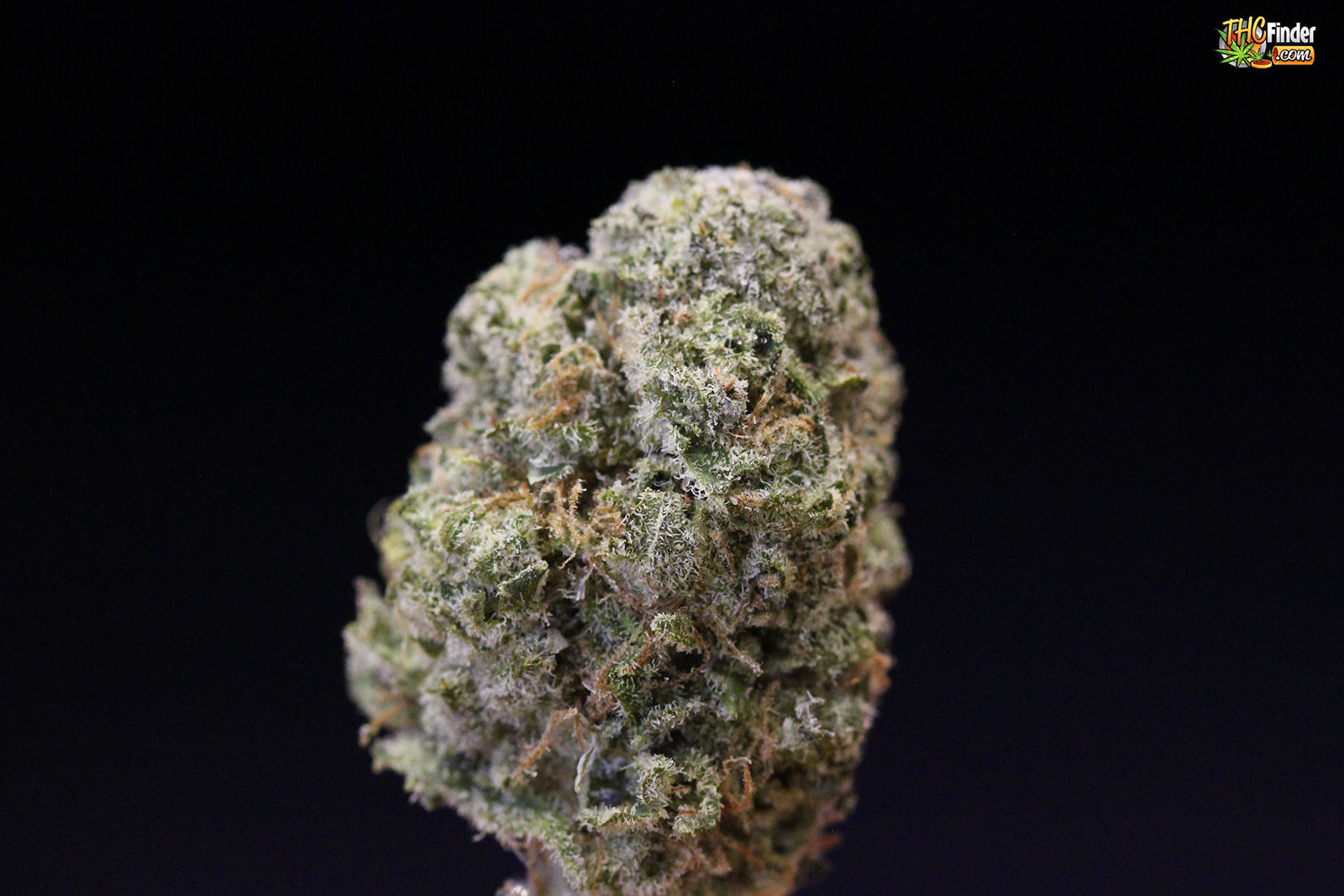 kryptonite-medical-cannabis