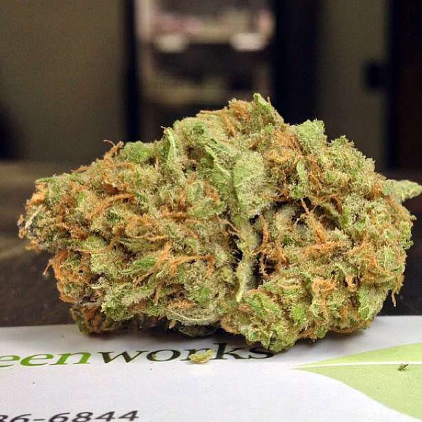 lemon-widow-weed