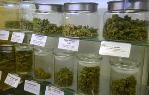 dispensaries-back-open-in-fort-collins