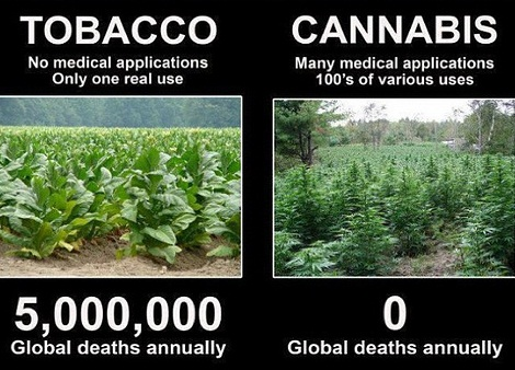 marijuana-vs-cigarettes