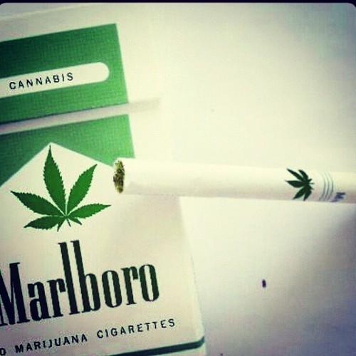 marlboro-of-weed