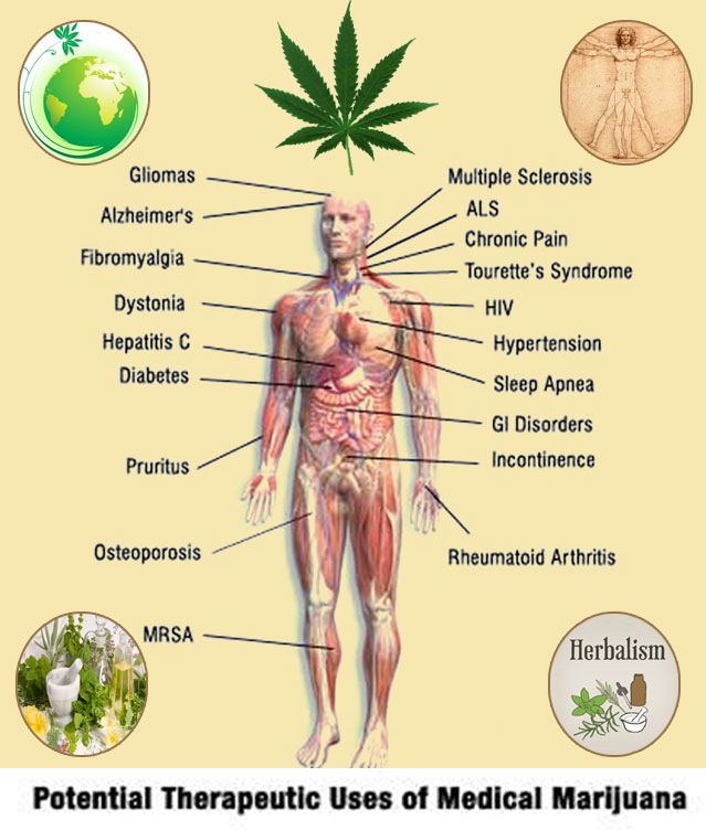 marijuana has newly discovered benefits profound  marijuana has newly discovered benefits profound possibilities thc finder