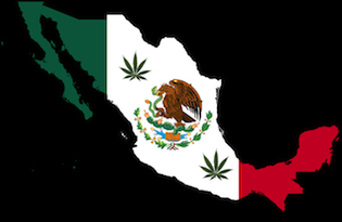 mexico-city-marijuana