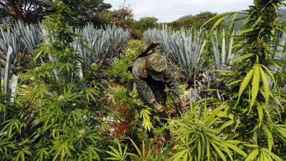 mexico-legalize-cannabis