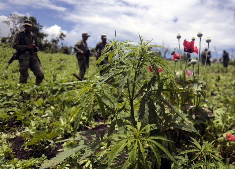 mexico-mulls-legal-marijuana-shops