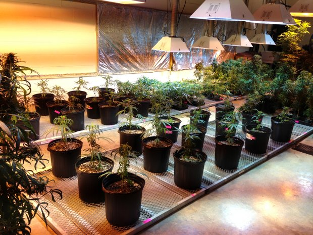 music-in-the-grow-room