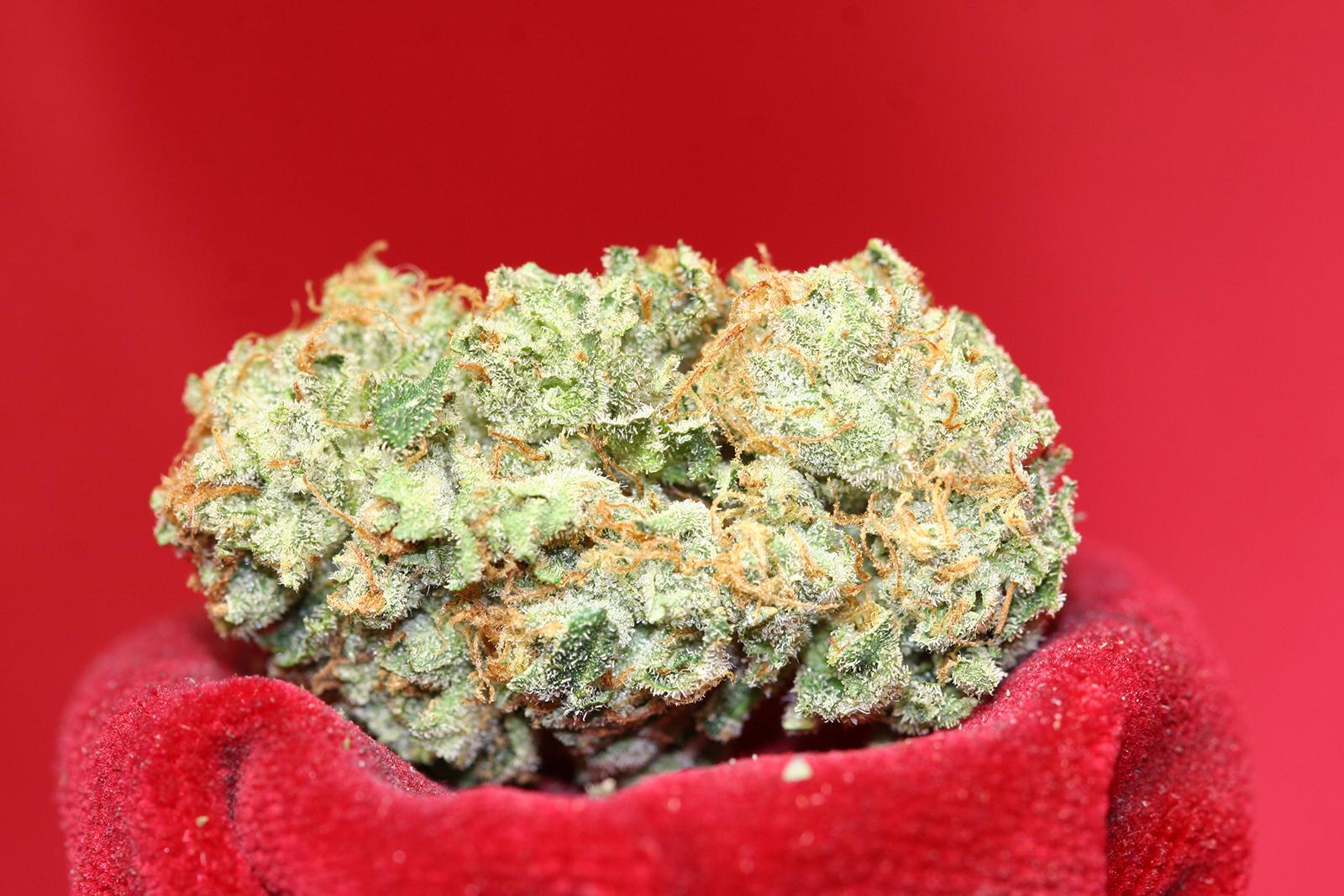 neptune-og-cannabis