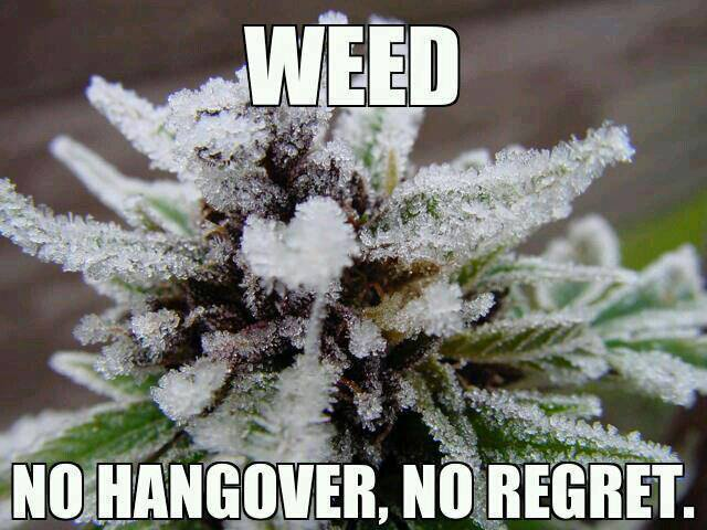 weed-no-regrets