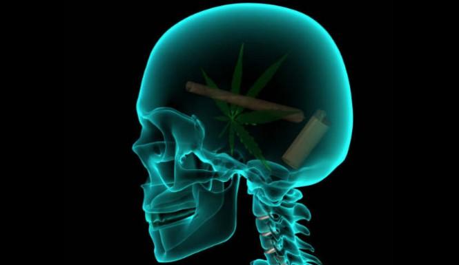 marijuana-does-not-lower-your-iq