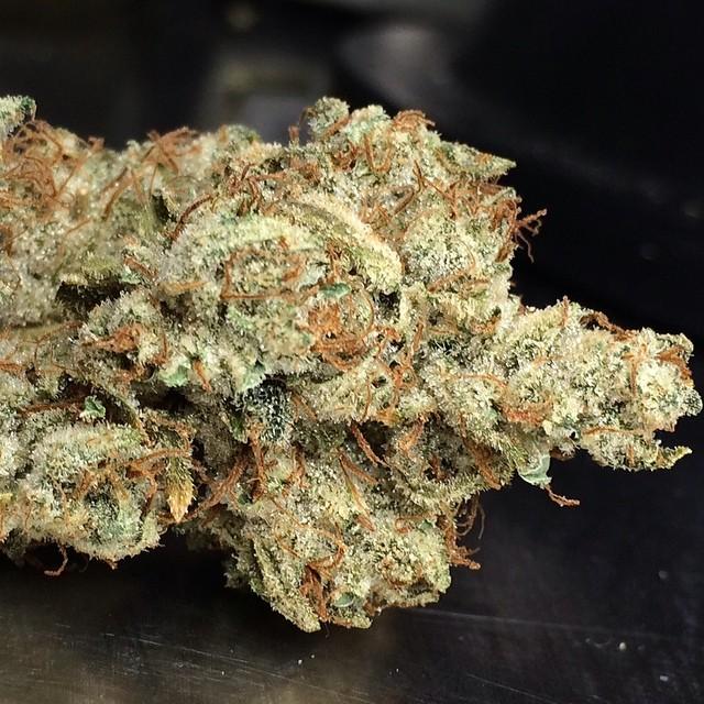 northern-jack-weed
