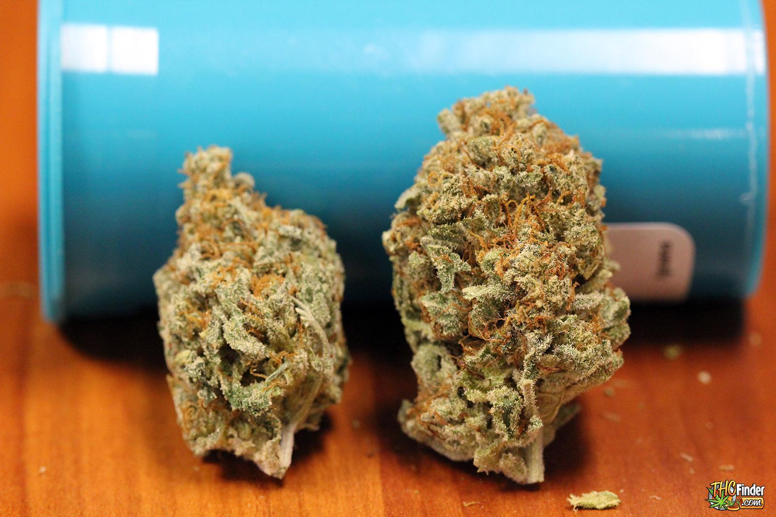 nyc-diesel-cannabis