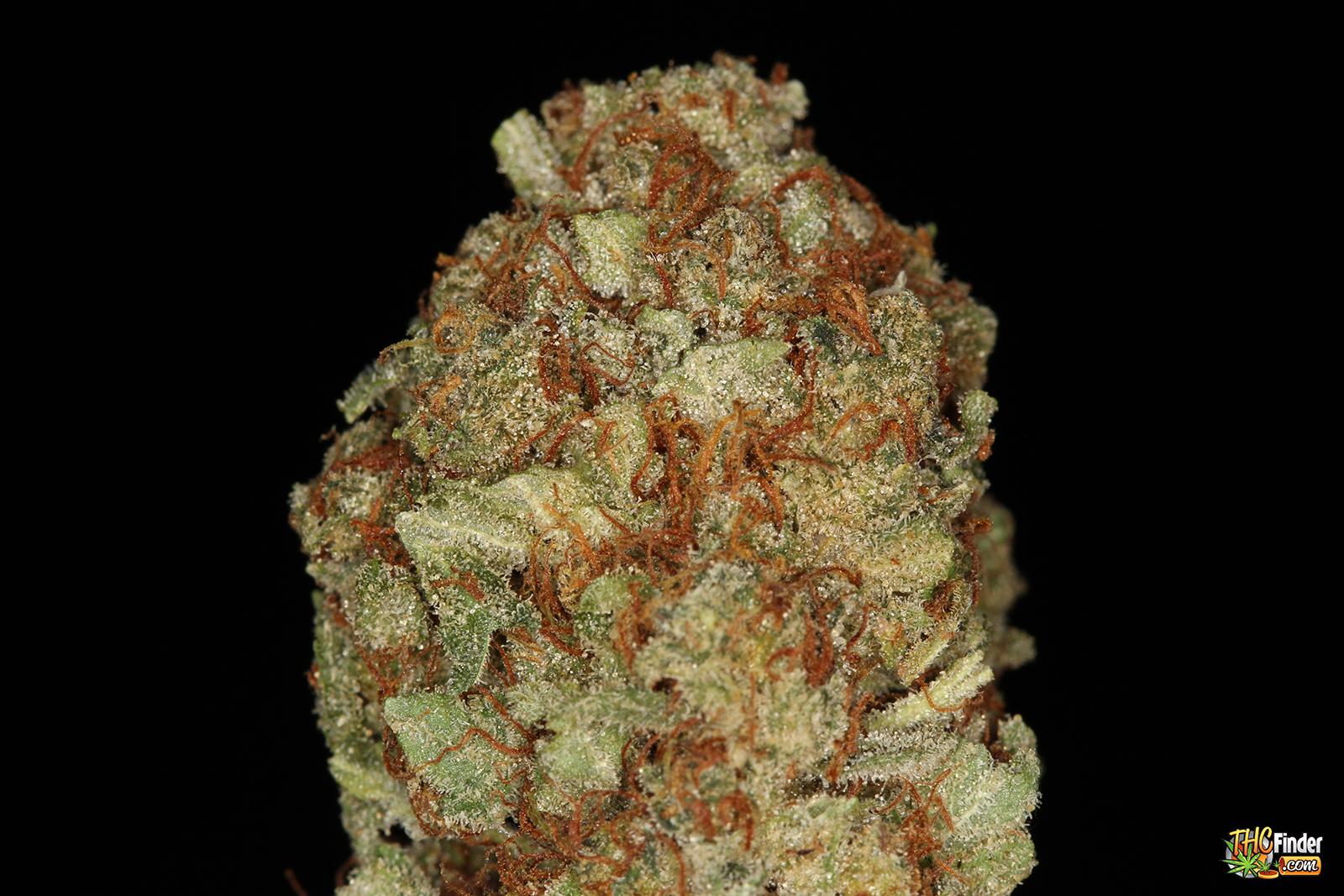 nycdiesel-weed-1