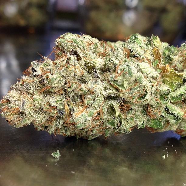 ogre-og-hybrid-weed