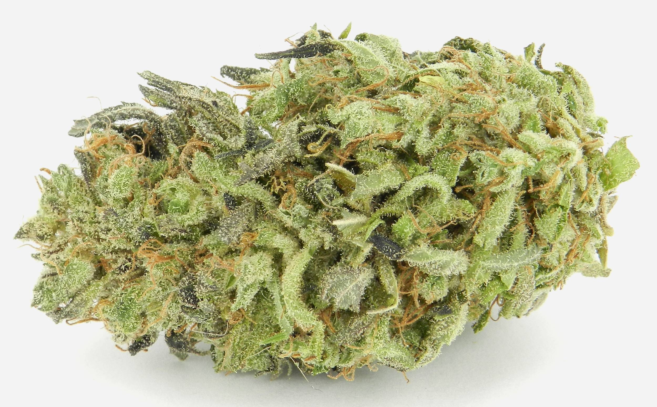 pure-sativa-strain