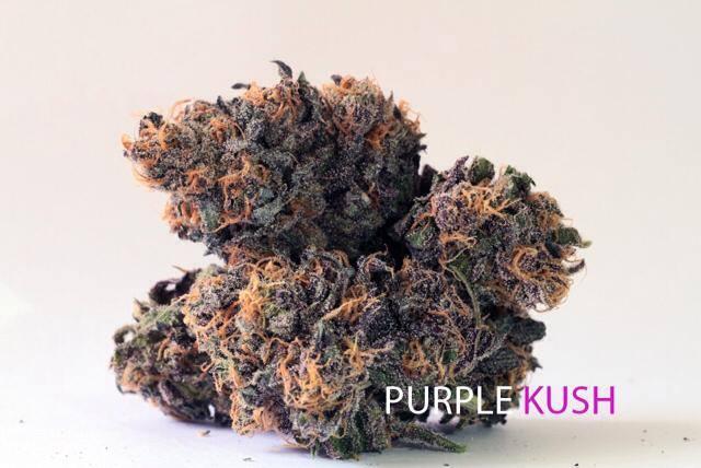 purple-kush-weed