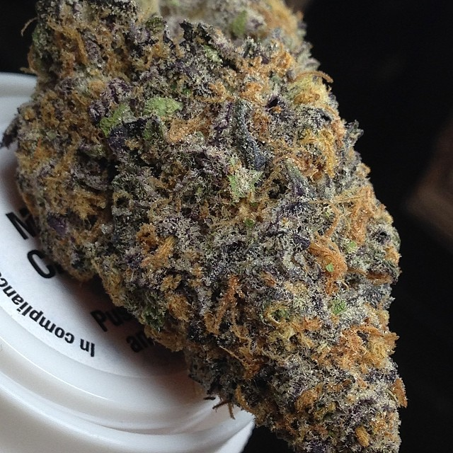 purple-urkle-weed