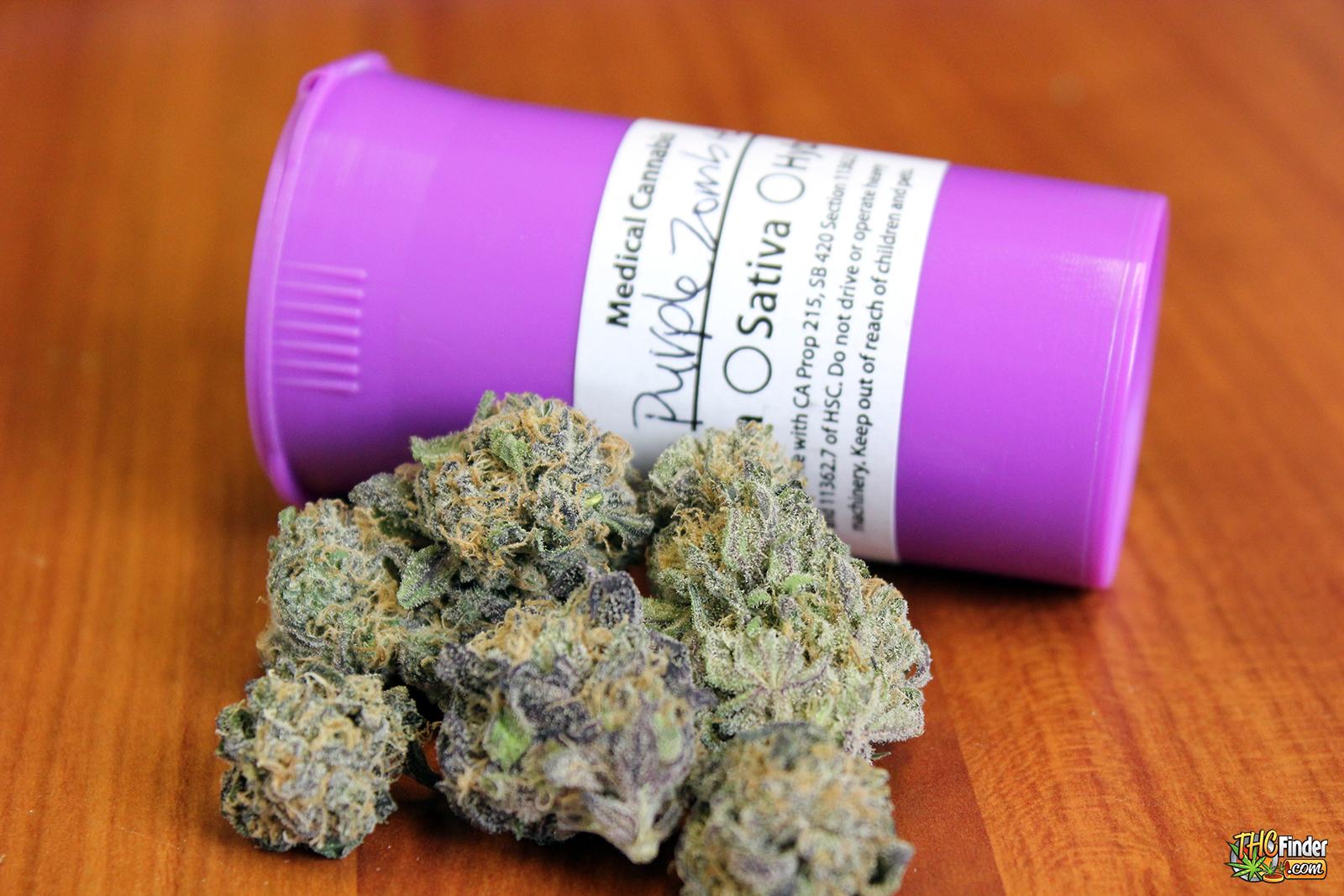 purple-zombie-weed