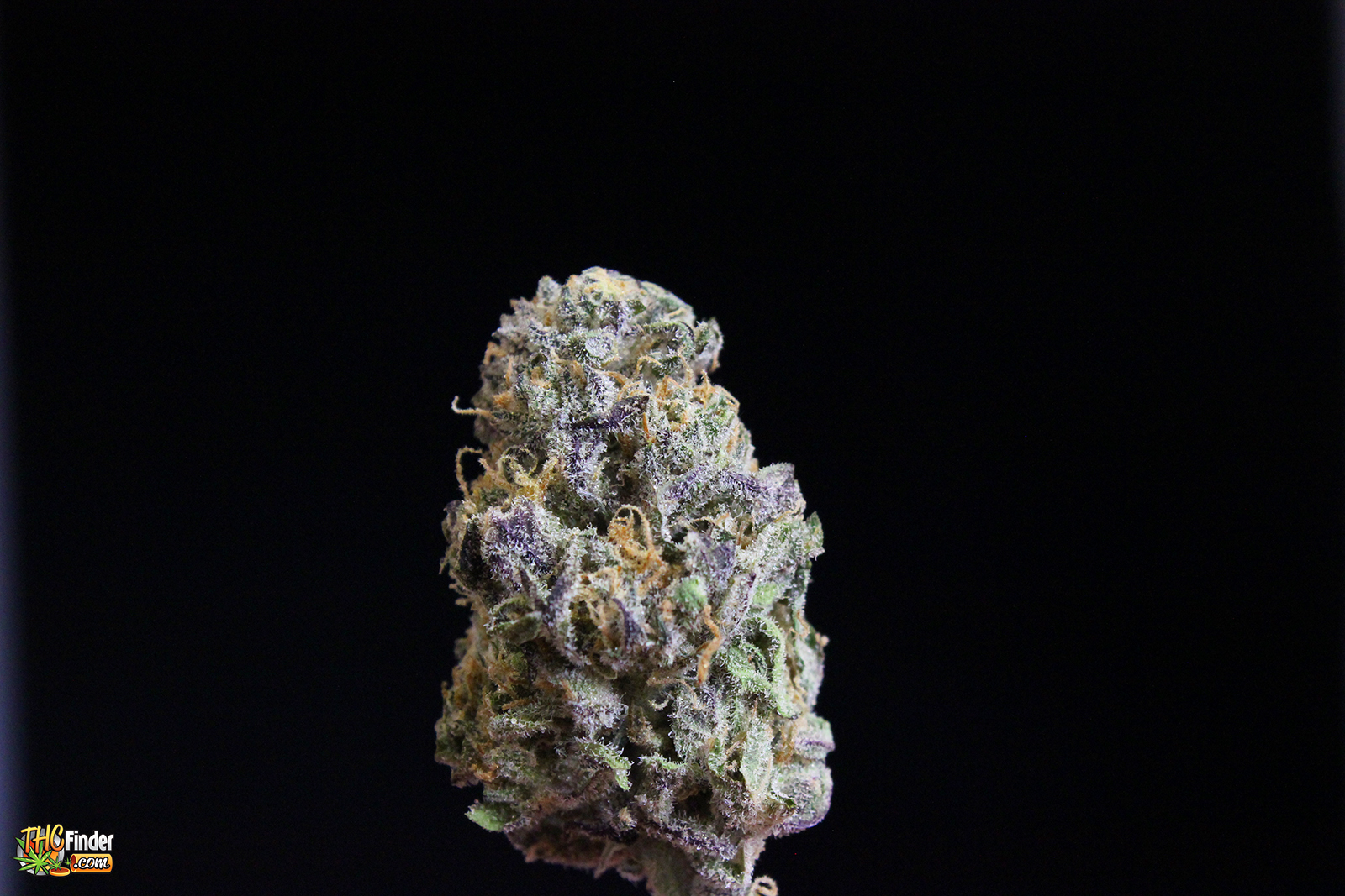 purple-zombie-mmjweed
