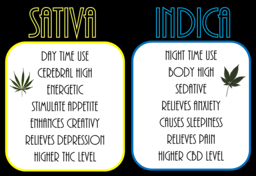 how to tell the difference between sativa and indica buds