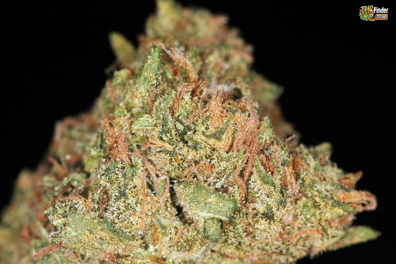 sfv-og-weed-3