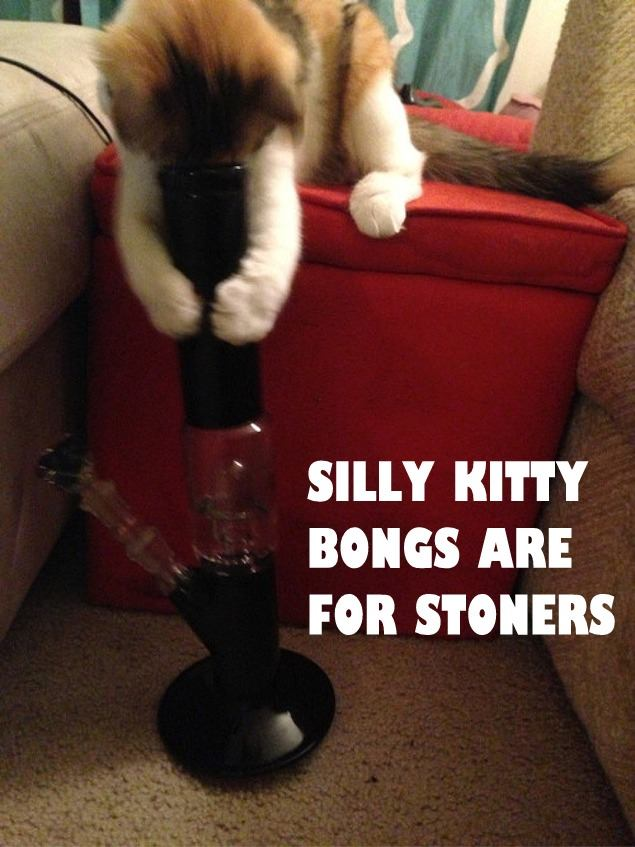 silly-kitty-bongs-are-for-humans