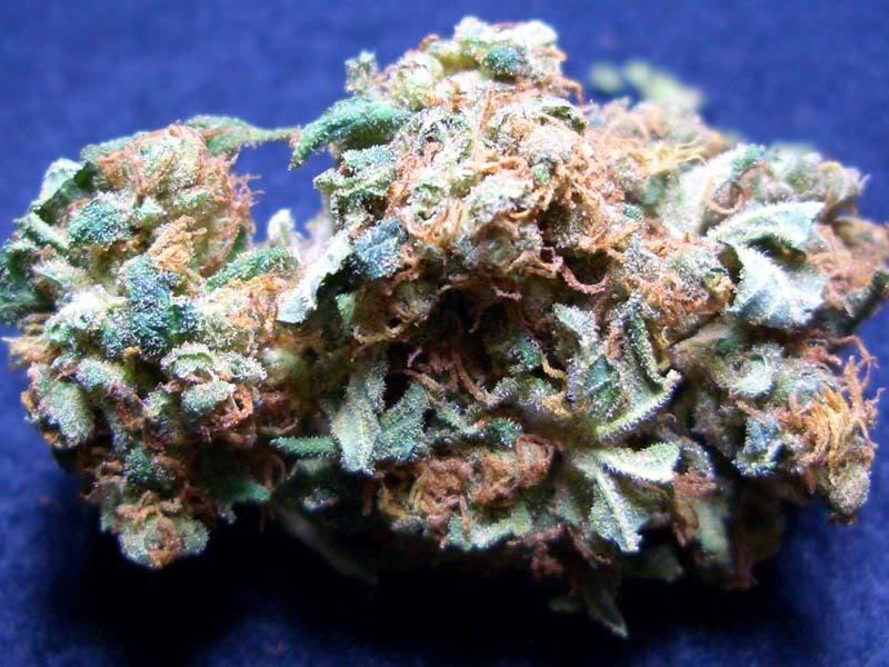 snowcap-weed