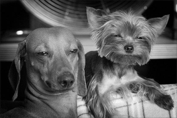 stoner-pets