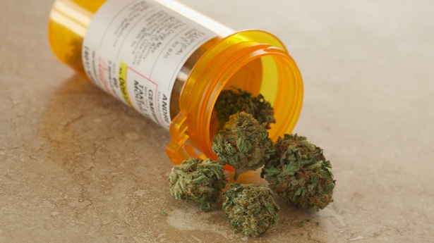 study-shows-cannabis-shrinks-tumors