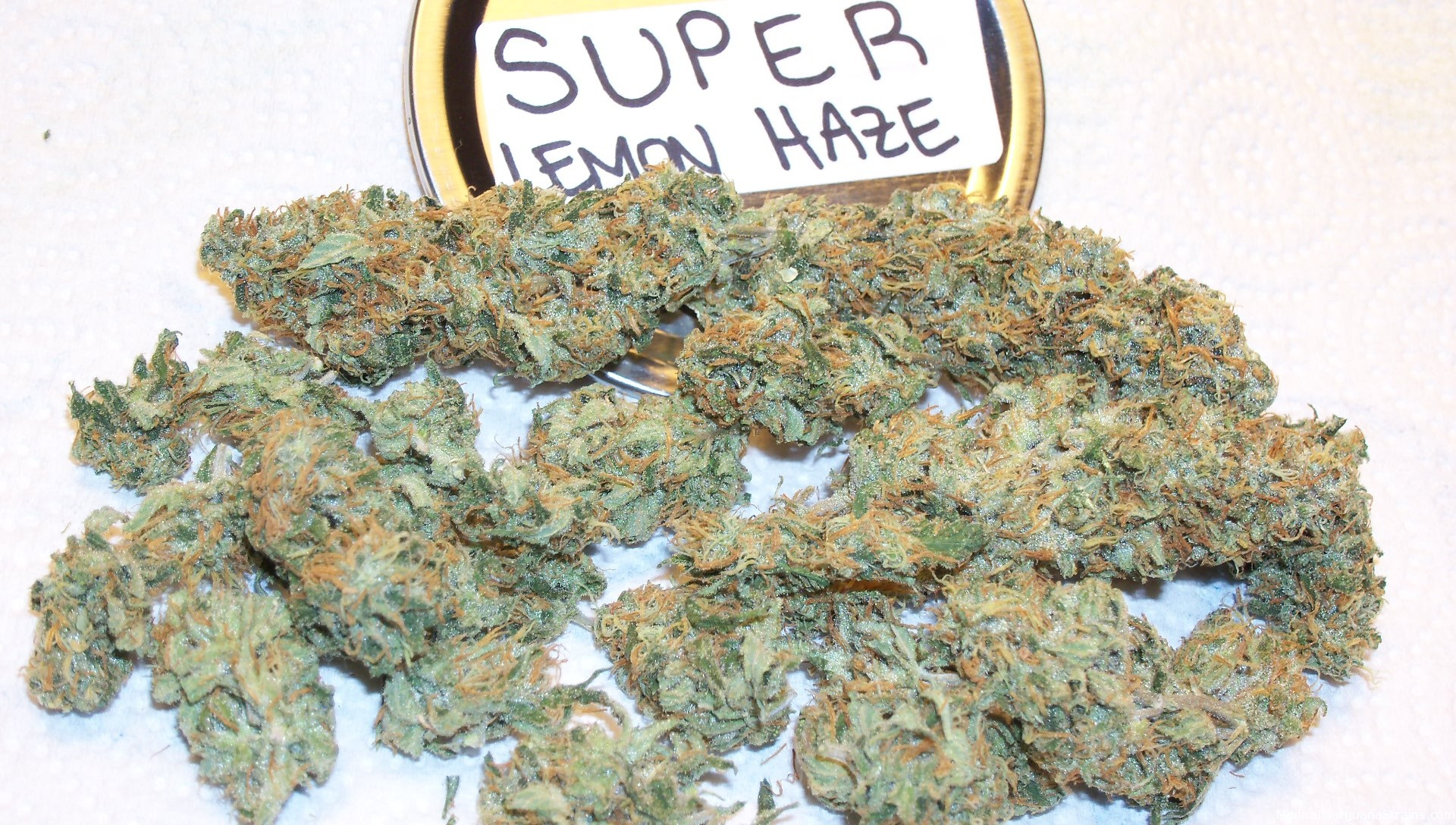 super-lemon-haze-weed