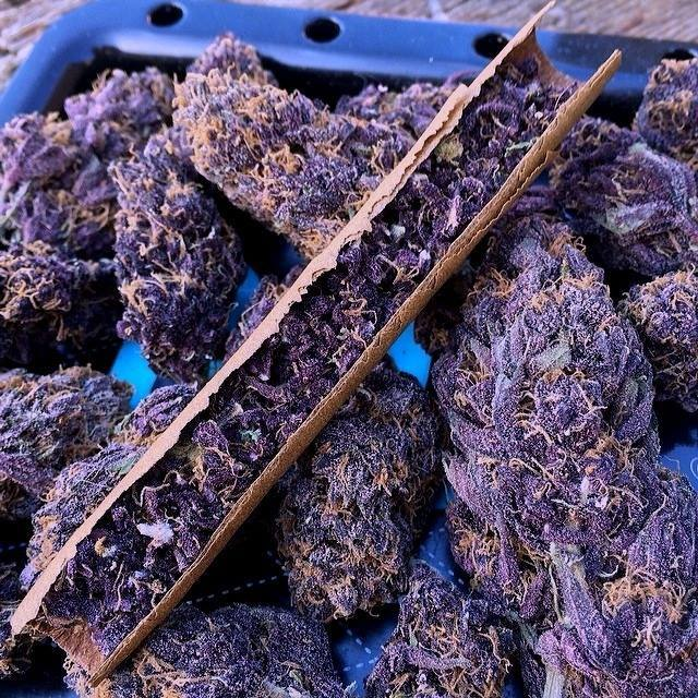 taste-the-purple-weed