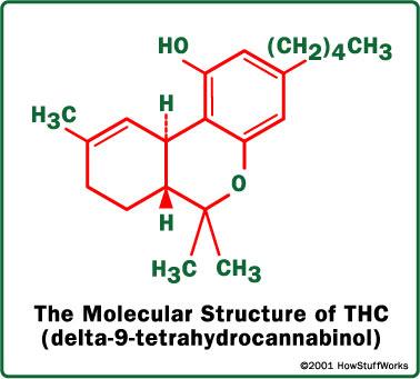 thc-1