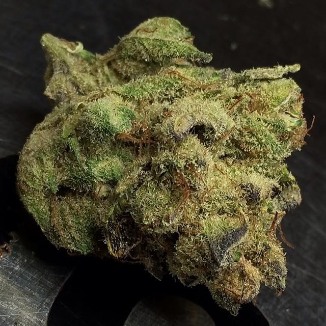 toxic-og-weed