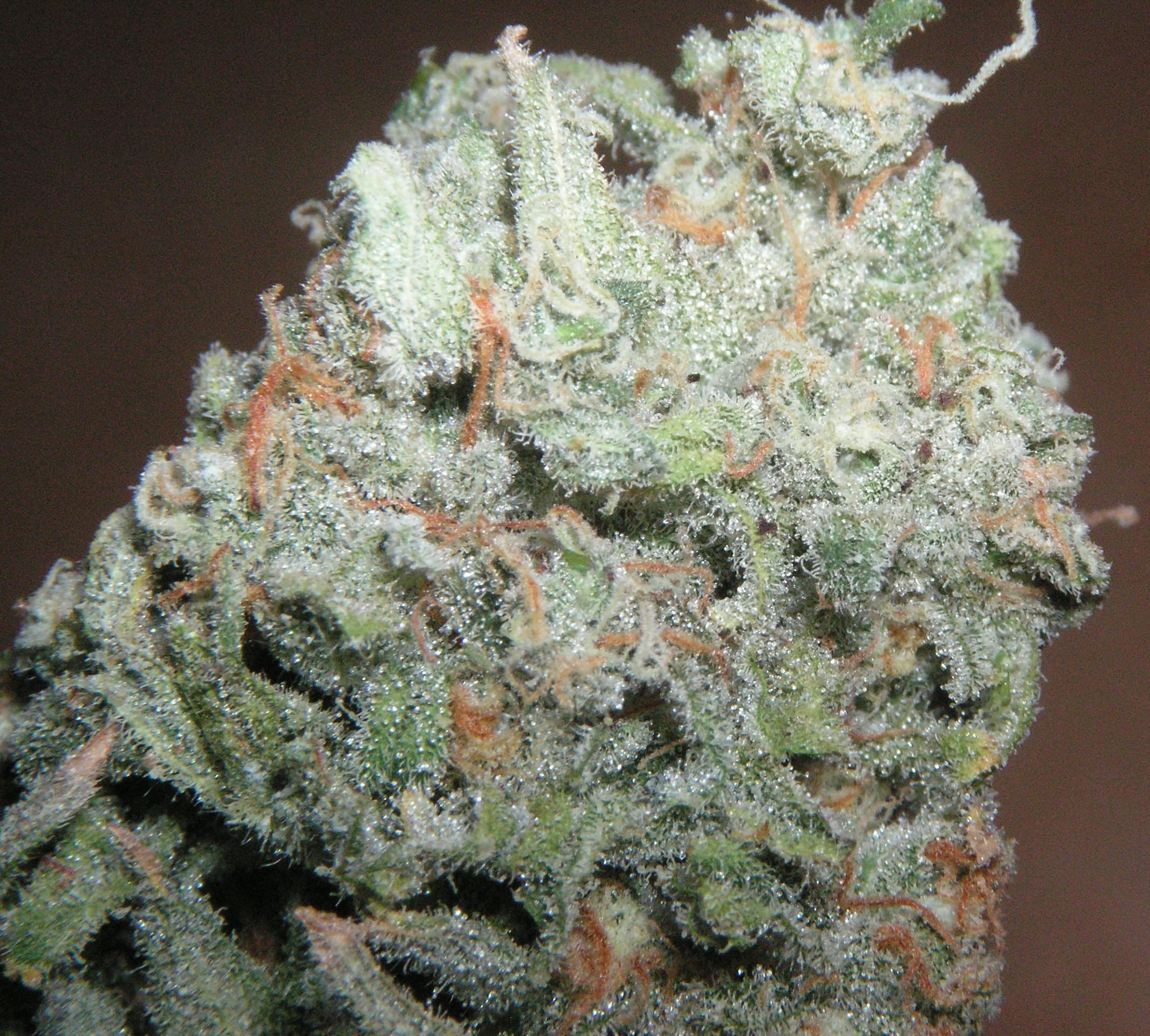 trainwreck-hybrid-weed