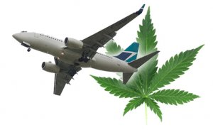 tsa-may-let-cannabis-on-planes
