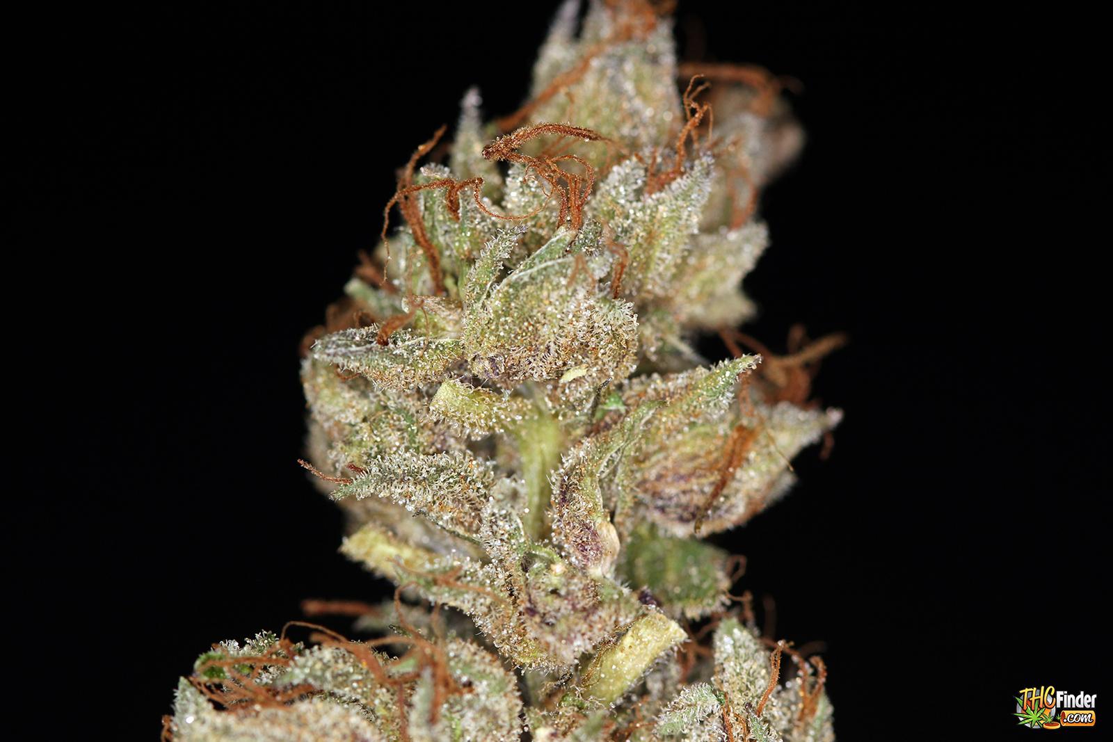 u2-og-medical-marijuana