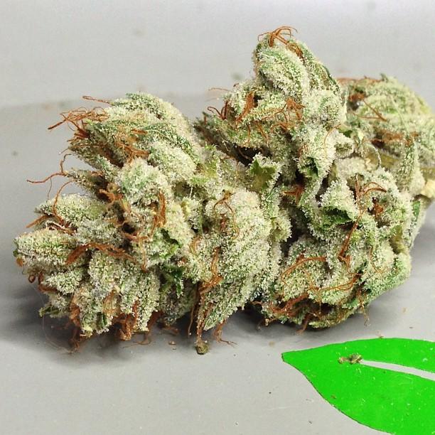 vsog-weed-bud