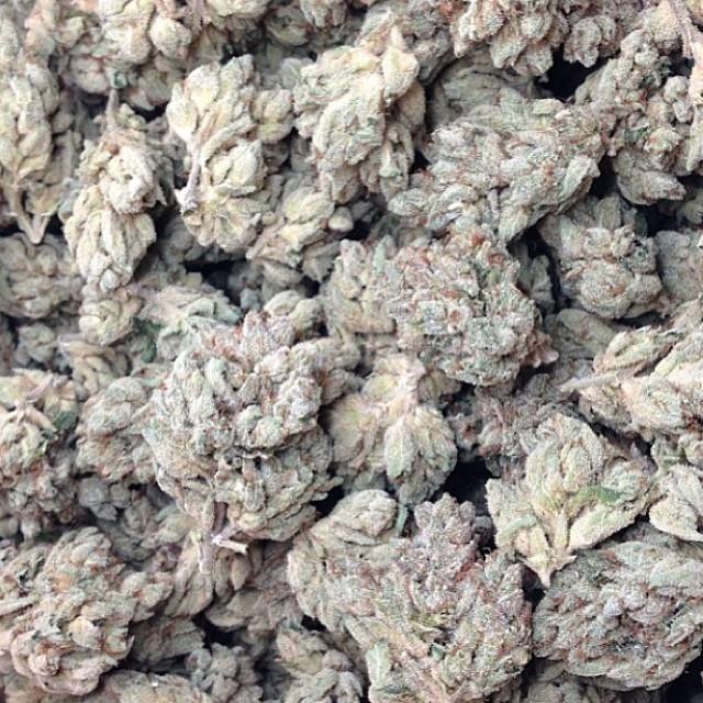 vsog-weed