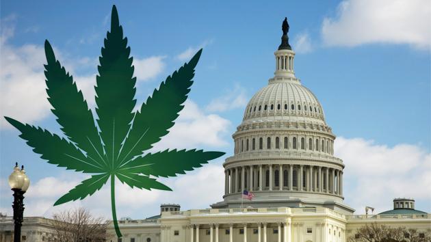 wa-dc-mmj-legalization