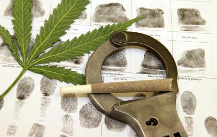 wa-family-facing-charges-for-marijuana