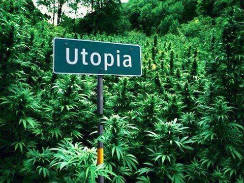 cannabis-world