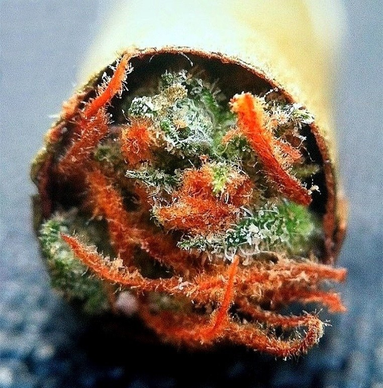 whats-packed-in-yourblunt
