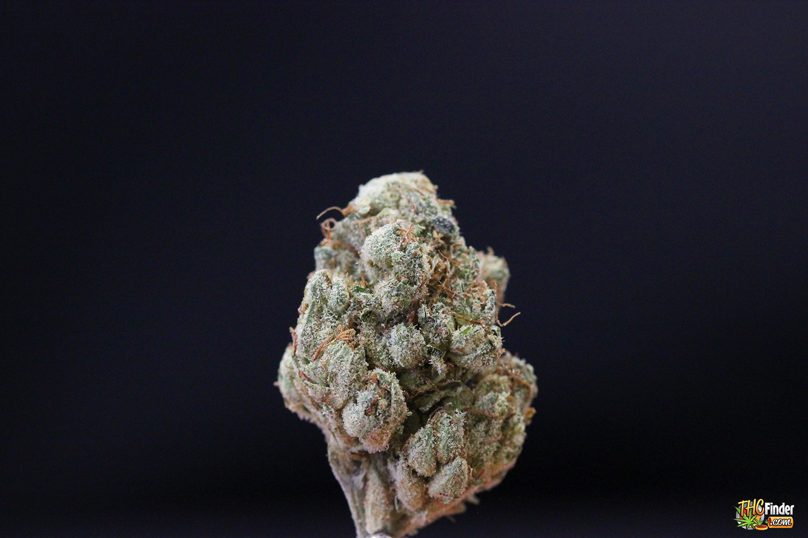 white-diamond-weed