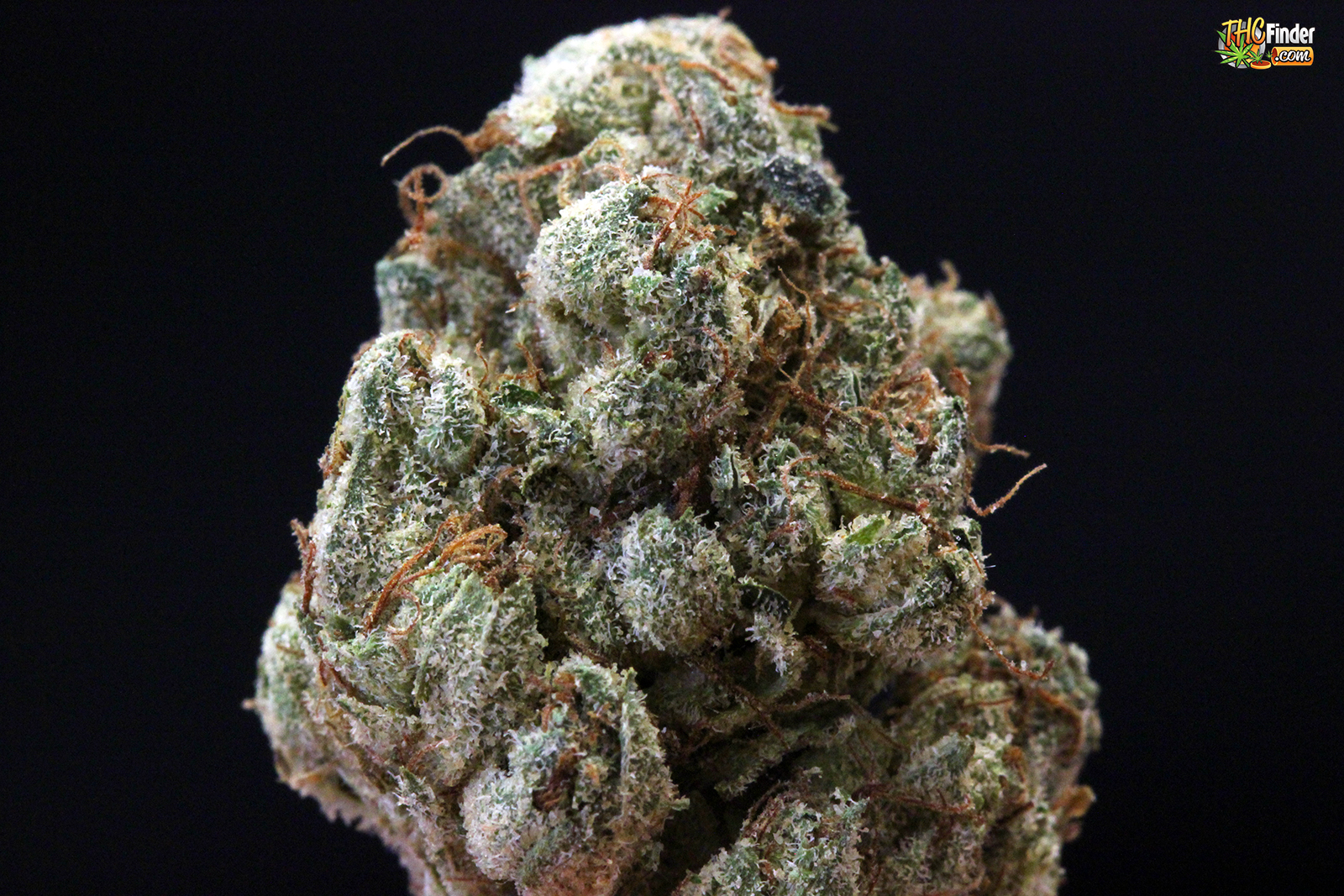 white-diamond-cannabis