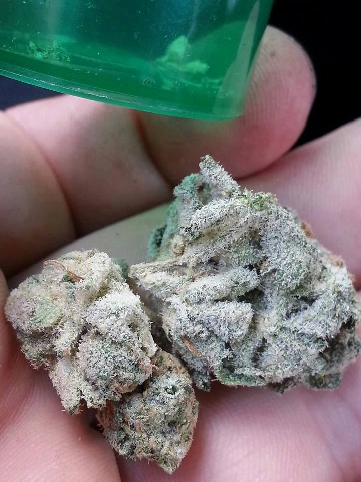 white-widow-weed