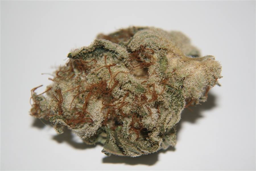 white-widow-cannabis