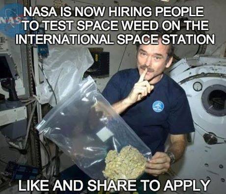 would-you-like-to-test-spaceweed