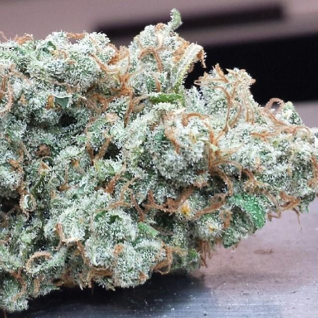 jx13-hybrid-weed