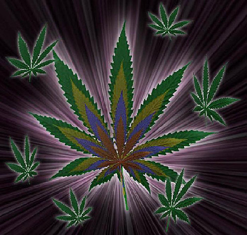 ... capitalize on the expanding medical marijuana market that has made the
